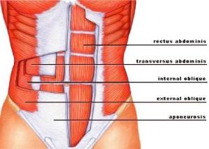 abdomis