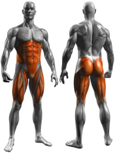 Zapojené svaly