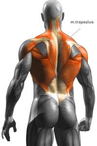 Trapezový sval