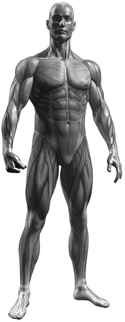 Anatomie je základ
